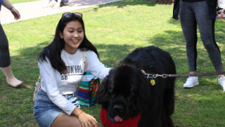 Photo of a student petting a dog on the green