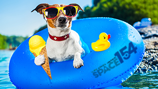 Photo of a dog wearing sunglasses in a pool with and ice cream cone. Space 154 is written on the tube the dog is sitting on.